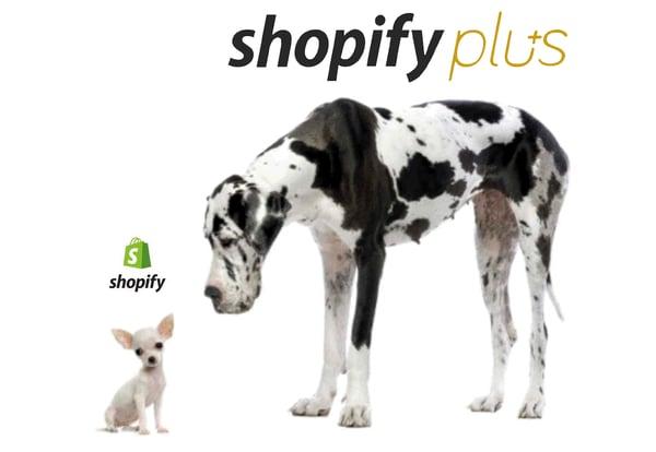 Perché dovresti passare da Shopify a Shopify Plus?