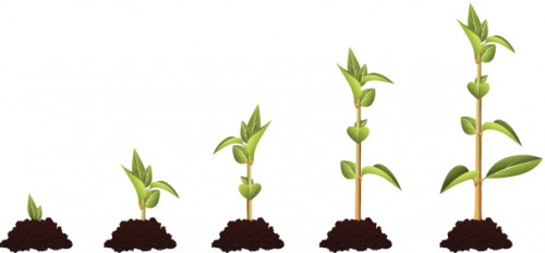 coltivazione più che nutrimento in ottica inbound marketing